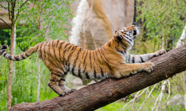 Discovering 6 World-Famous Zoos